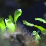 aquarium19